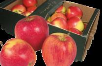 Dt. Tafeläpfel Red Prince